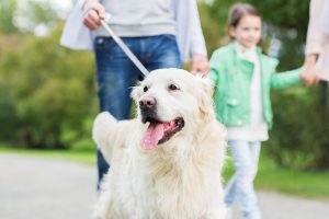 family, pet, domestic animal and people concept - close up of fa