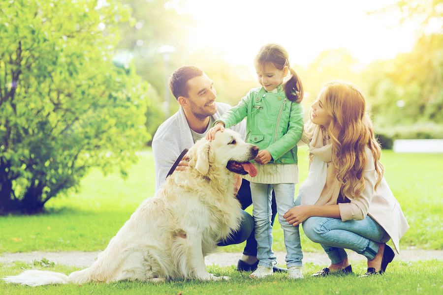 Find Out If Your Pet Is A Legal ESA