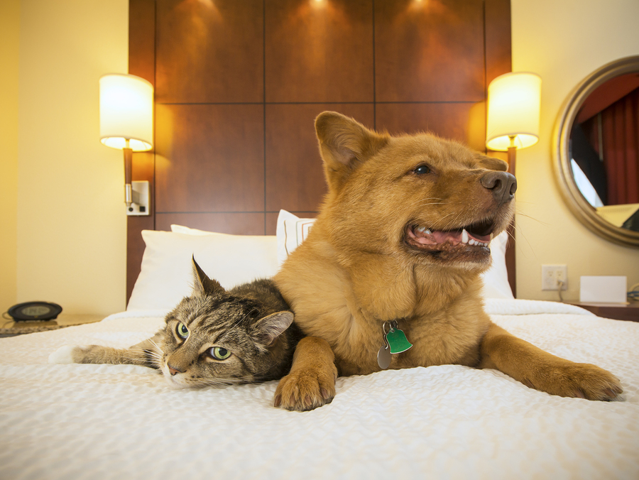 The In's and Out's of Hotel Policies & Emotional Support Animals