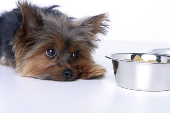 Common Signs That Your Dog May Be Sick
