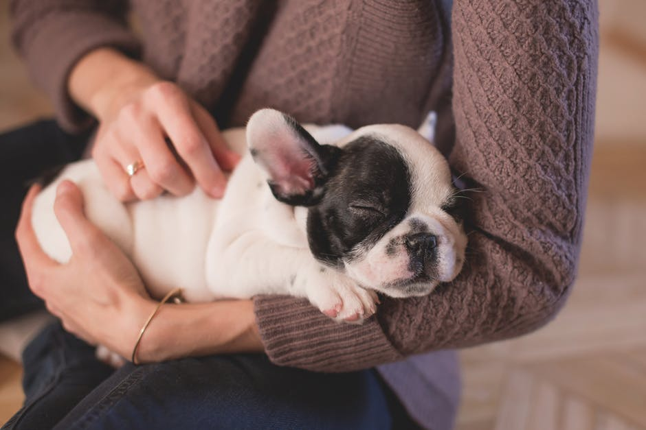 Dog Breeds That Don't Provide Emotional Support