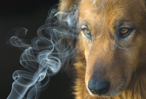 Smoking Isn't Healthy For Humans or Their Pets