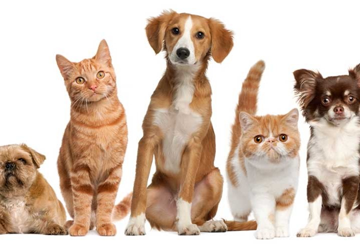 Have More Than One Pet Comes With Added Responsibility