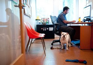 dog in workplace