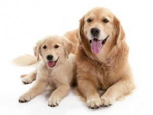 female and male puppy