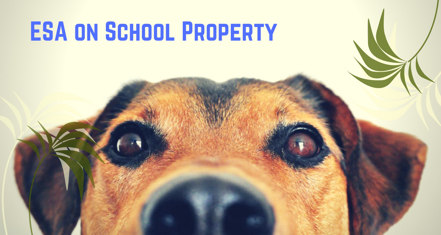 Common Question: ESA on School Property