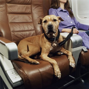 airline travel for pets