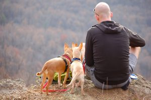 man with dogs hiking