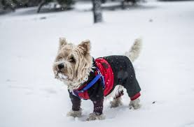 Tips On How To Keep Your Pet Warm During Cold Times