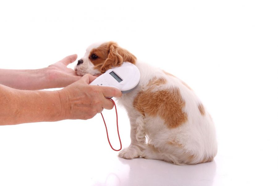 Microchip For Pets Have Their Pros & Cons