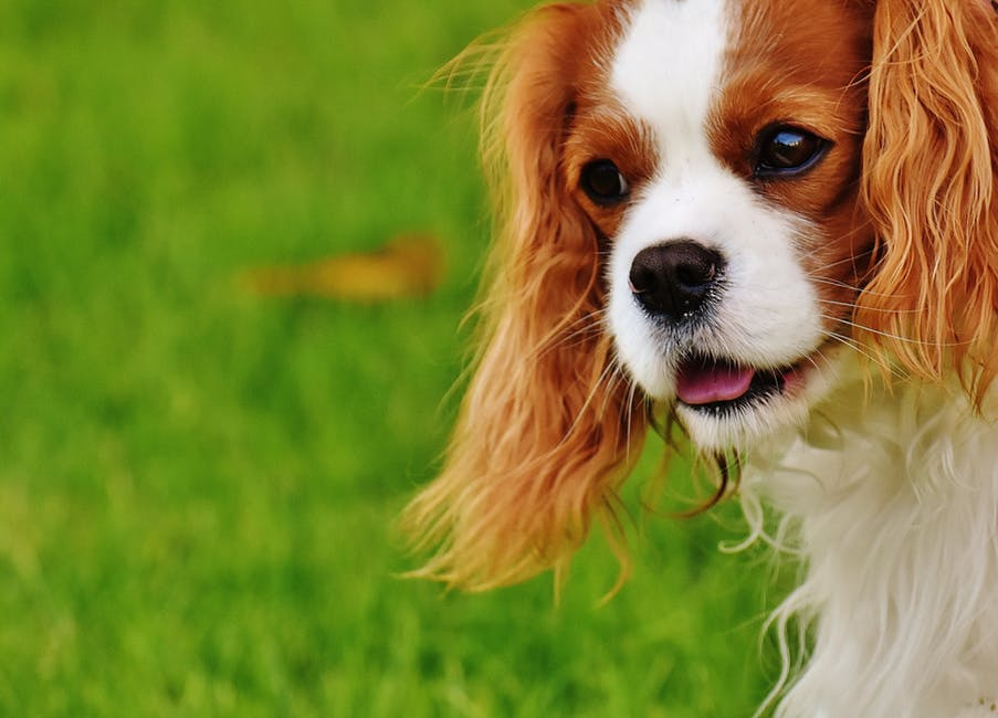 Ways To Train Your Dog To Become Less Aggressive