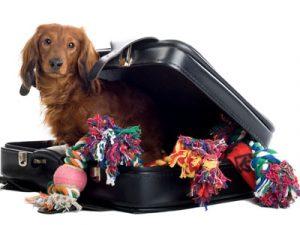 dog packing suitcase