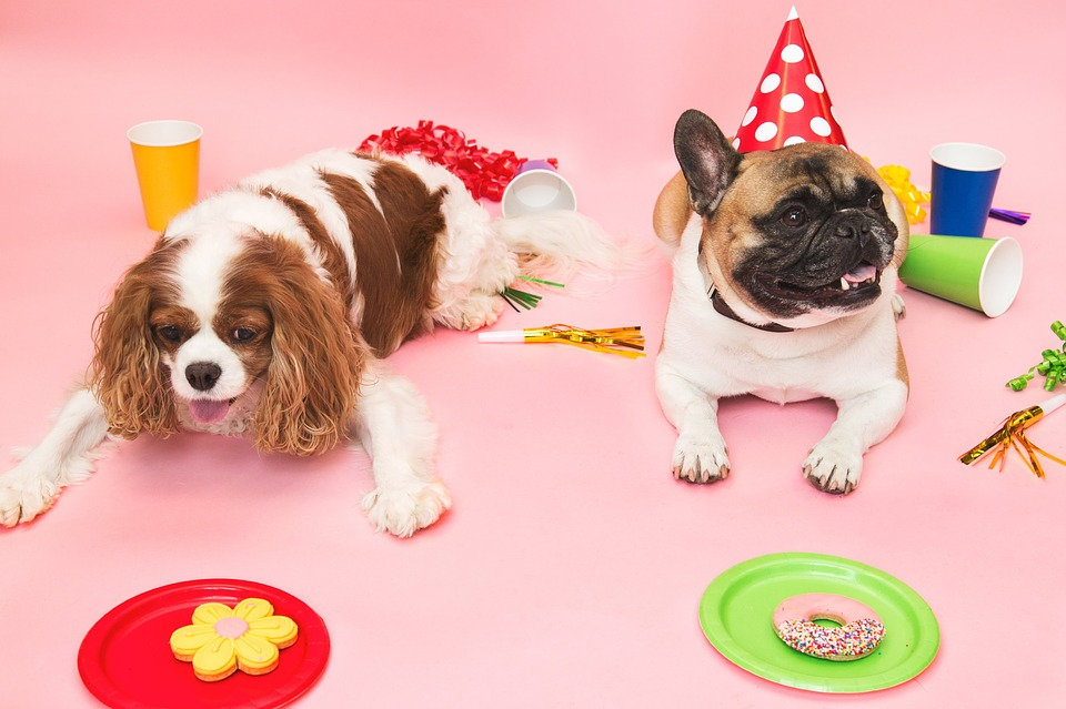Host The Best Pet-Friendly Holiday Party This Year