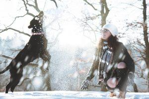dog playing snow