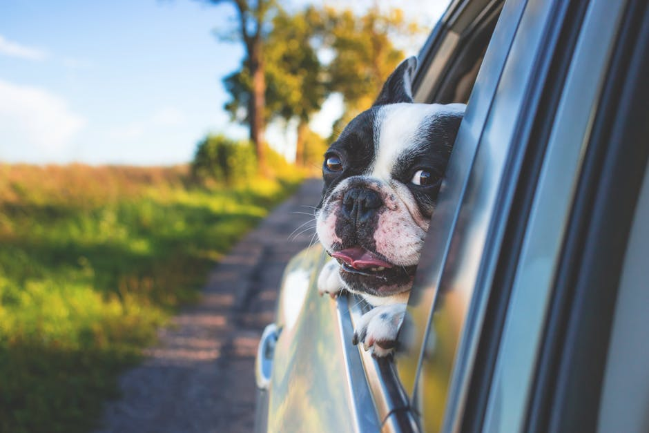 Travel Planning Tips To Ensure Your Pet Doesn't Drive You Insane