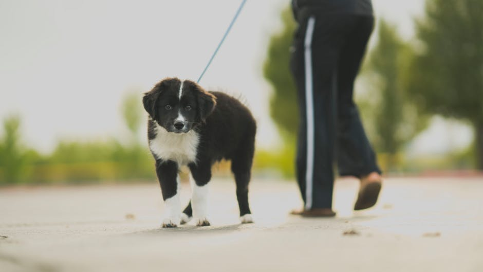 How To Choose The Right Dog Walker/Sitter