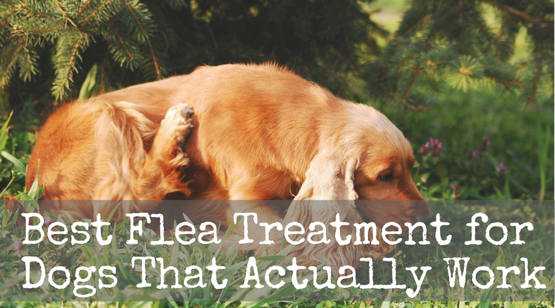 Best Flea Treatment for Dogs That Actually Work
