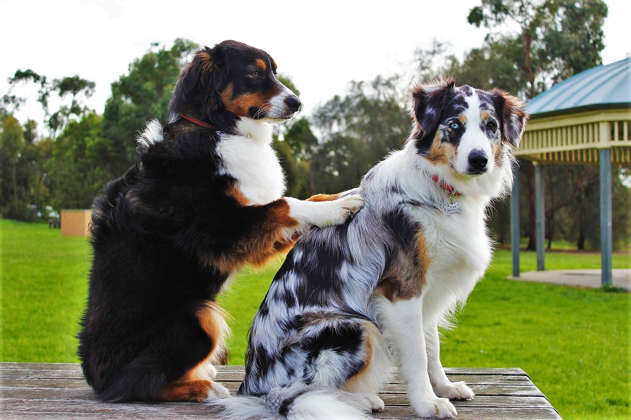 Animal Physical Therapy Benefits