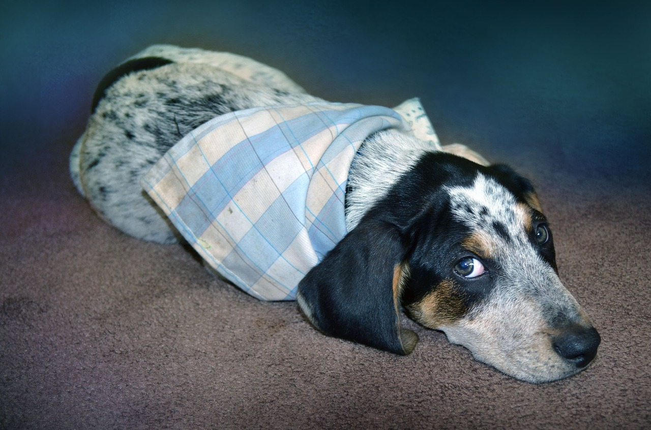 Dog Seizures: How to Help Dogs Who Are Prone To Them