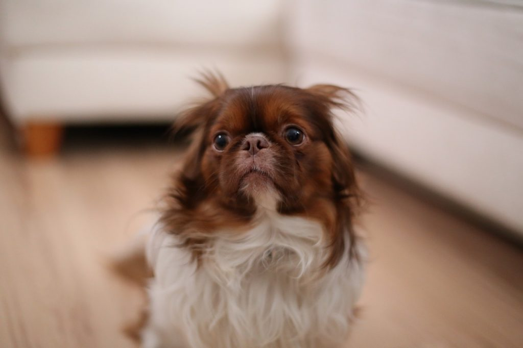 a sad little puppy