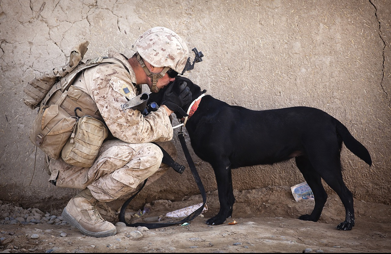 Everything You Need To Know About Service Dogs for Veterans with PTSD