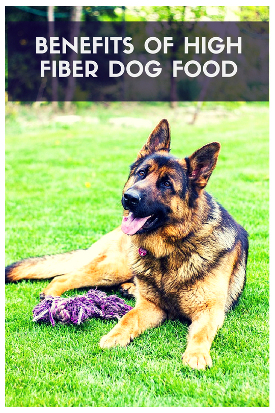 Benefits of High Fiber Dog Food