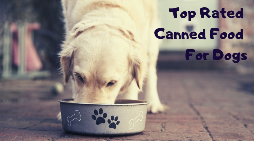 Top Rated Canned Food Brands For Dogs