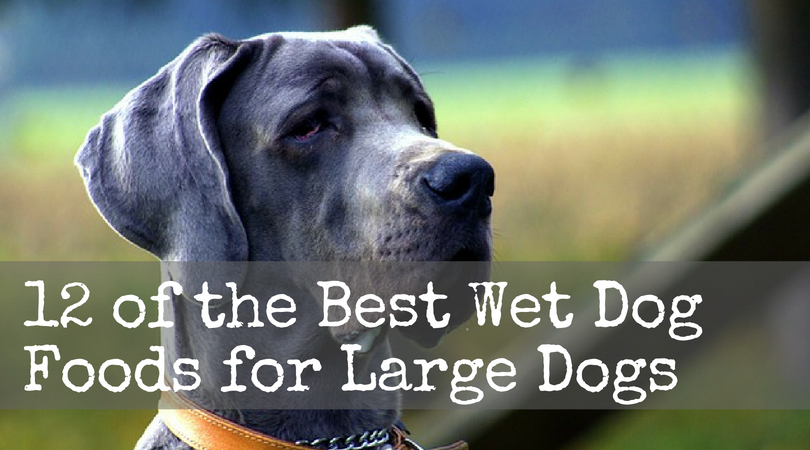 Wet Dog Food Brands That Your Dog Will Thank You For