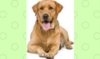 Picture of an Adult Dogs
