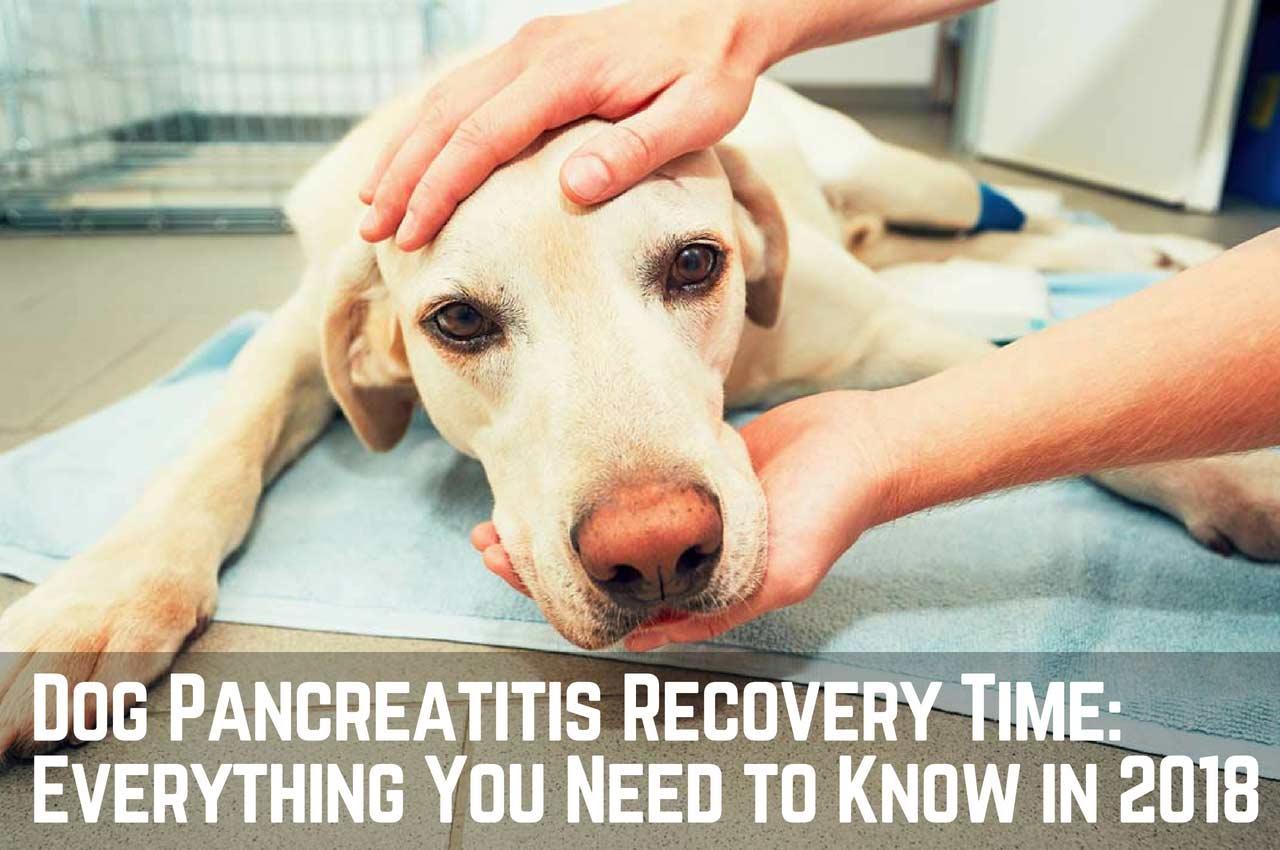 Dog Pancreatitis: Everything You Need to Know