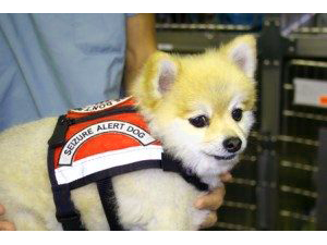 Dog with a Support Dog Vest