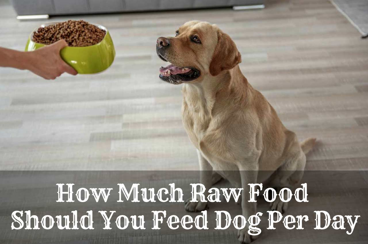 How Much Raw Food Should You Feed Dog Per Day?