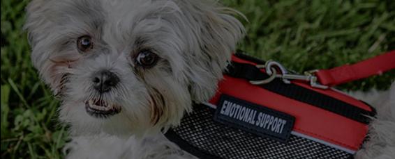 Emotional Support Dog Wearing ESA Vest