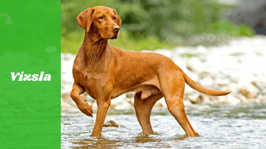 dog walking through water