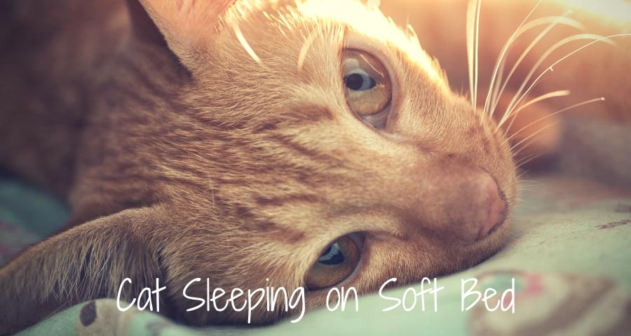 Cat Sleeping on Soft Bed