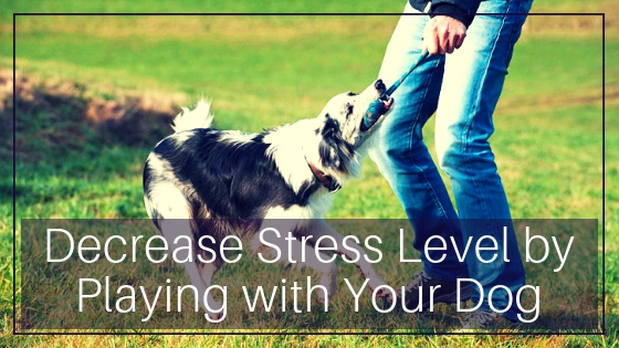 Decrease Stress Level by Playing with Your Dog