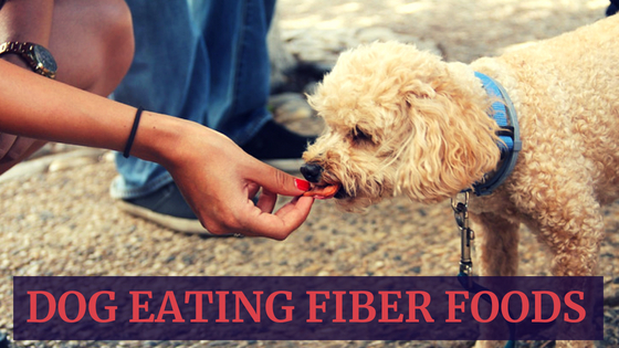 Dog Eating Fiber Foods