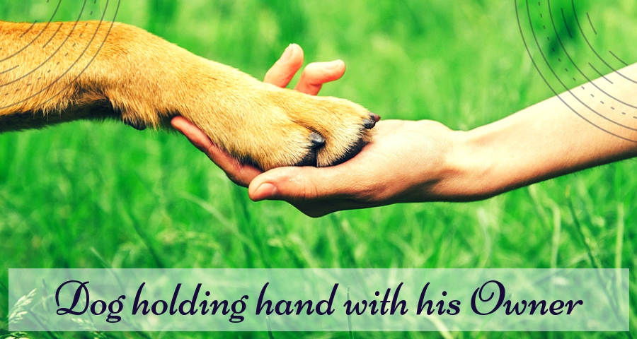 Dog holding hand with his Owner