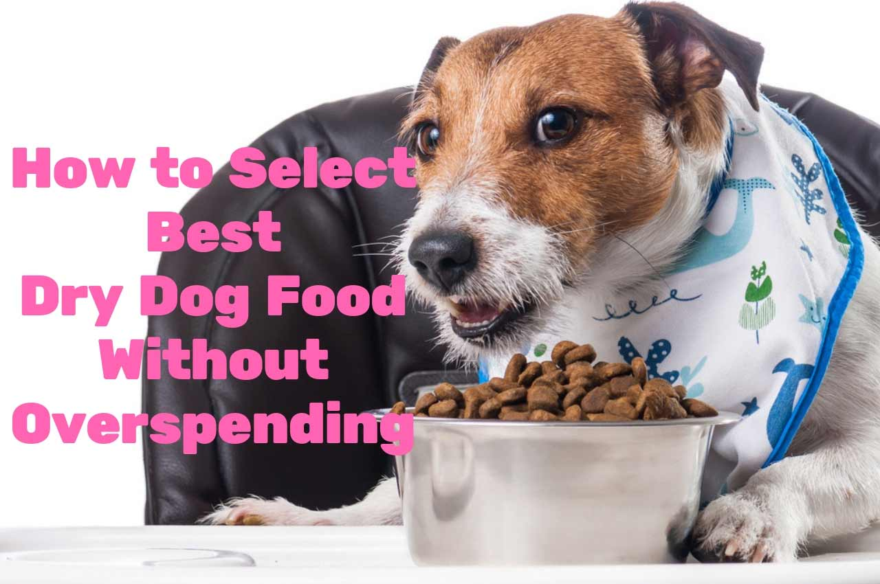 How to Select Best Dry Dog Food Without Overspending?