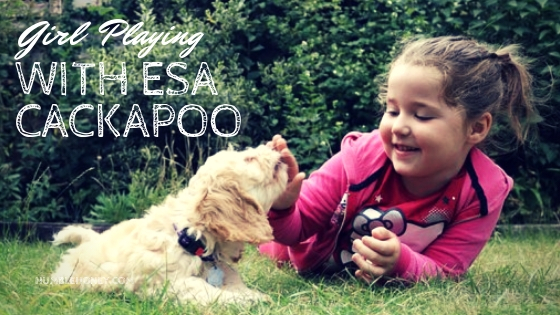 Little girl playing with Cackapoo ESA