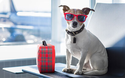 Support Animal Wearing Sunglasses In Airport