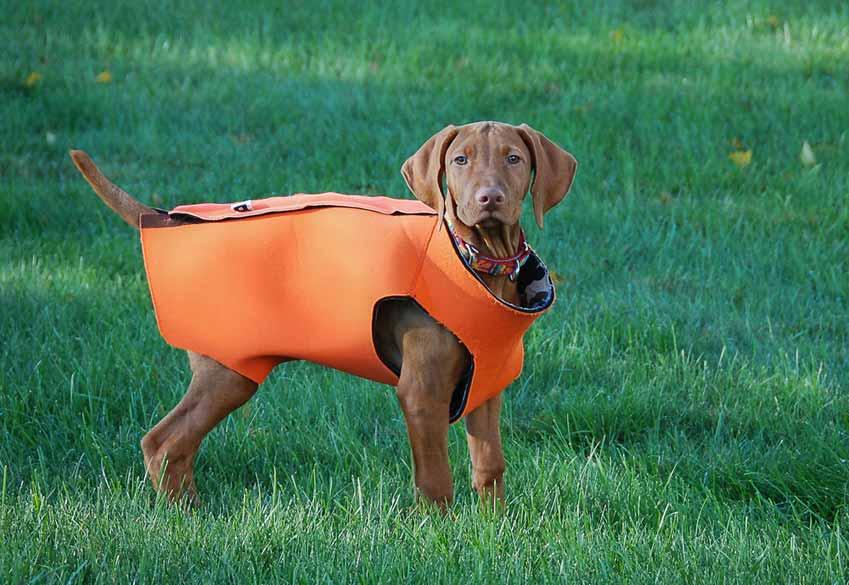 Dog-Anxiety-Vest