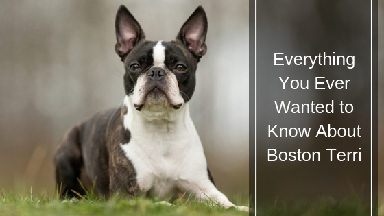 Everything You Ever Wanted to Know About Boston Terri