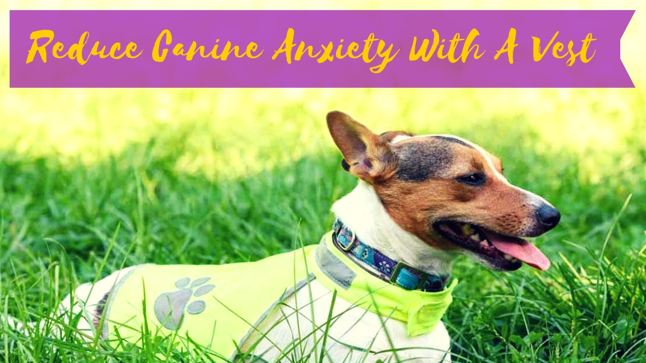 Reduce Canine Anxiety With A Vest
