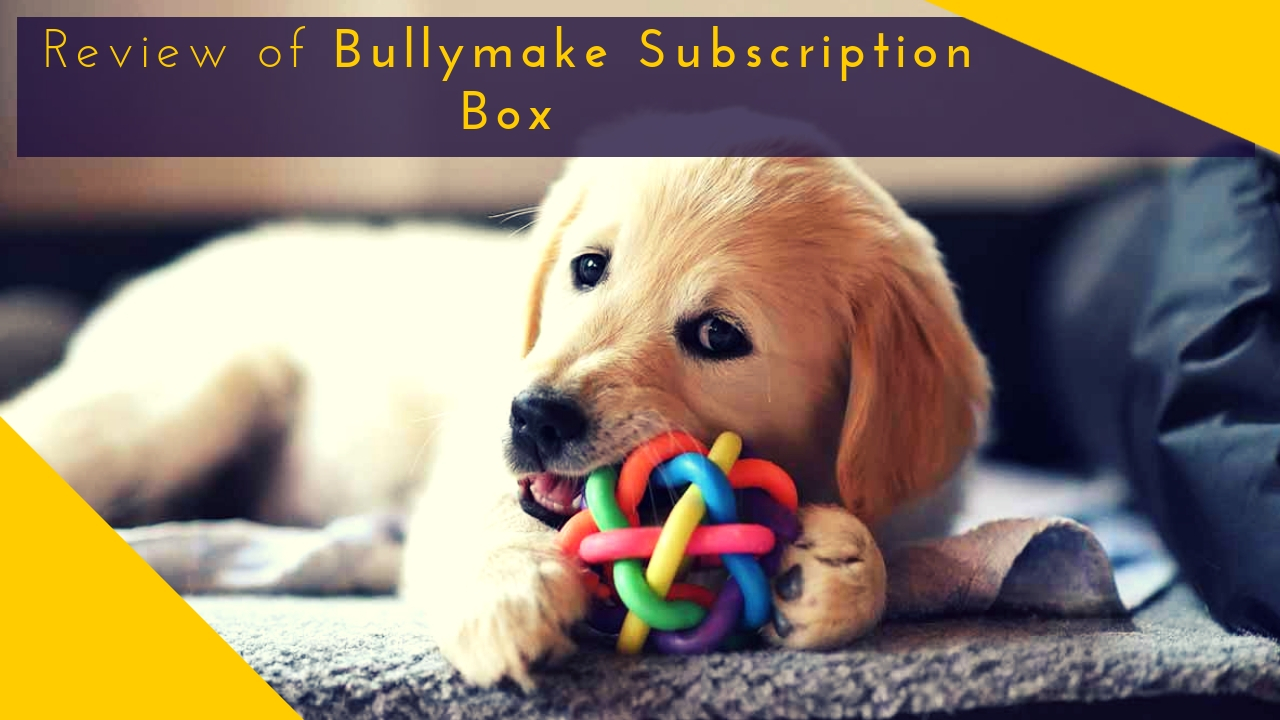 Bullymake Subscription Box Review