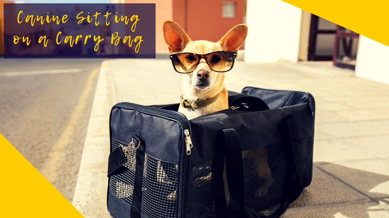 Canine Sitting on a Carry Bag