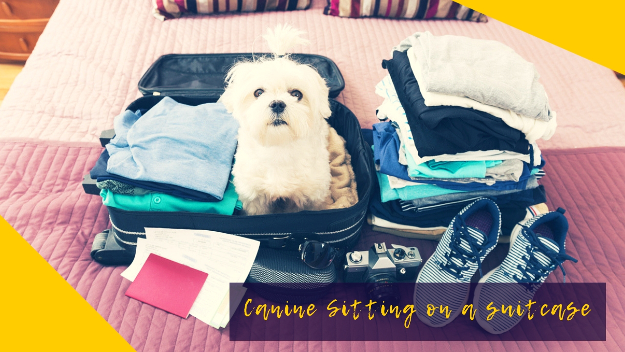Canine Sitting on a suitcase