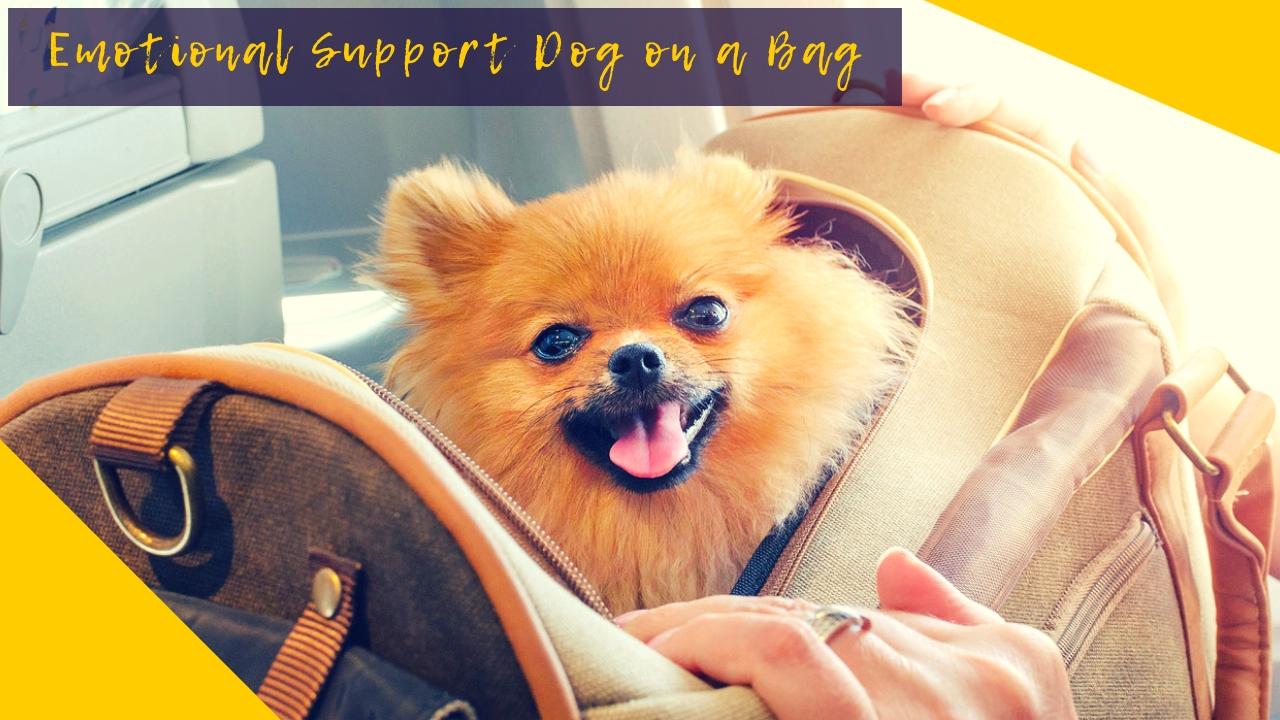 Emotional Support Dog on a Bag