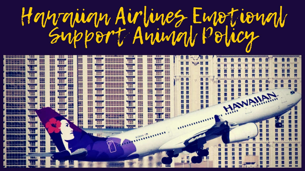 Hawaiian Airlines Emotional Support Animal Policy