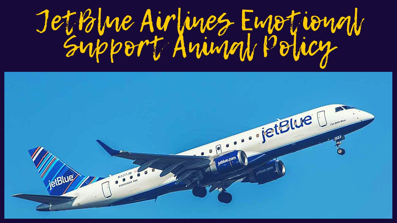 JetBlue Airlines Emotional Support Animal Policy
